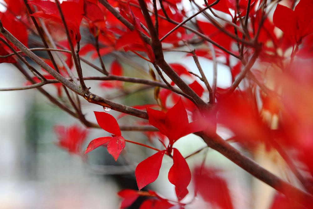 オープンガーデン・交野古民家教室 2016.11 -6